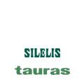 ŠILELIS / TAURAS